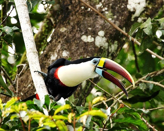 "Click on the toucan image below to buy the ""Photograph God"" book from amazon.com"