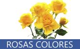 Fotografías de rosas de diversos colores como son amarillas, rosas, naranjas, blancas, rojas, carmín, ladrillo y matizadas - Roses