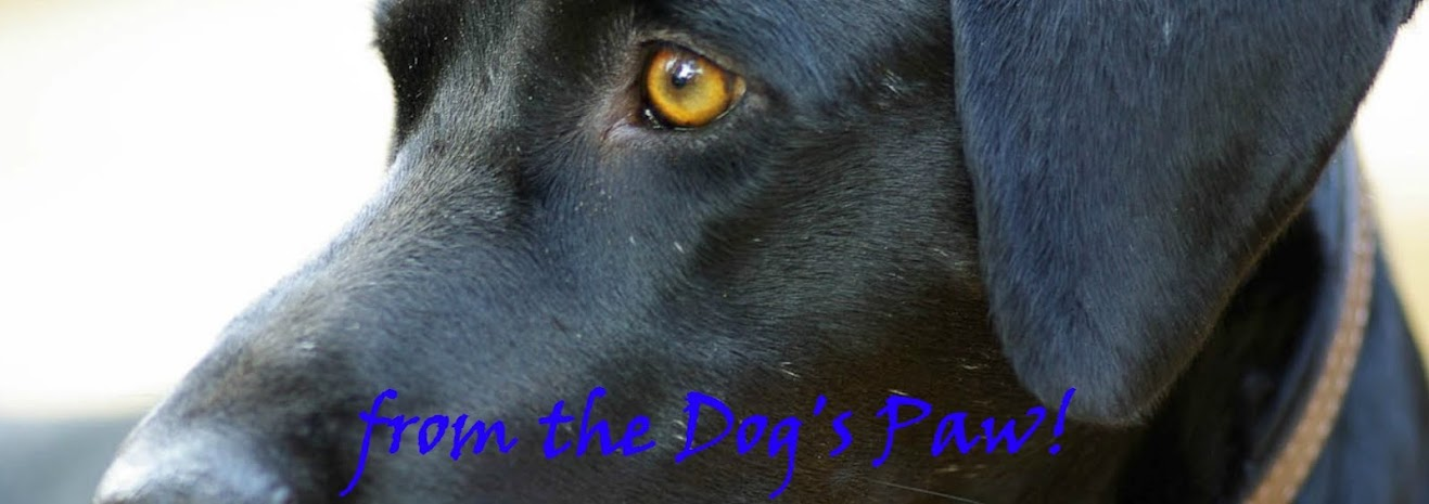 from the Dog's Paw- A Bloggery of Dogs and Cats