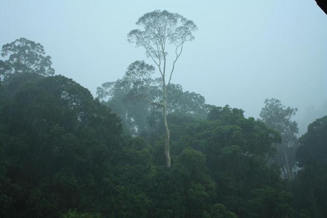 Pioggia nella foresta pluviale