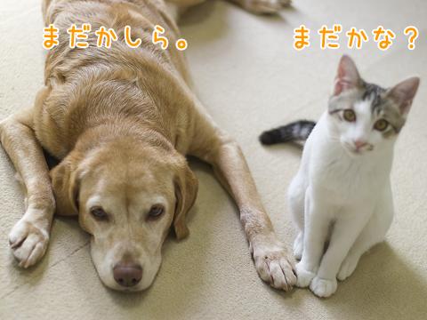待っている犬と子猫