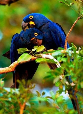 Resultado de imagem para flora e fauna no mato grosso do sul