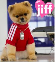 Jiff The Dog Breed