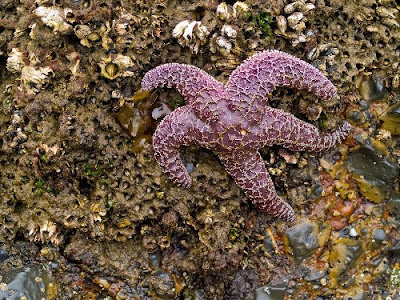 Hội chứng suy nhược ở sao biển