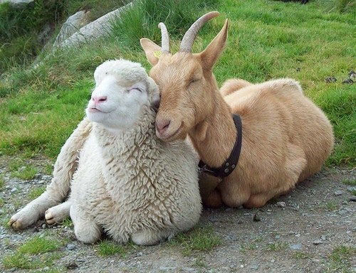 Image result for happy animals hugging