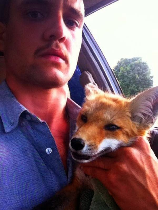 Only… 8 hours later, the man returned and discovered something amazing: the fox was alive. - A Man Found A Dead Fox Lying In The Street. When He Returned Later, He Could Not Believe What He Saw