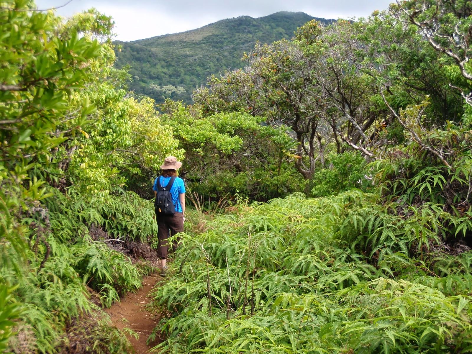 Ridge Hike Maui Top Trails Hiking on Maui