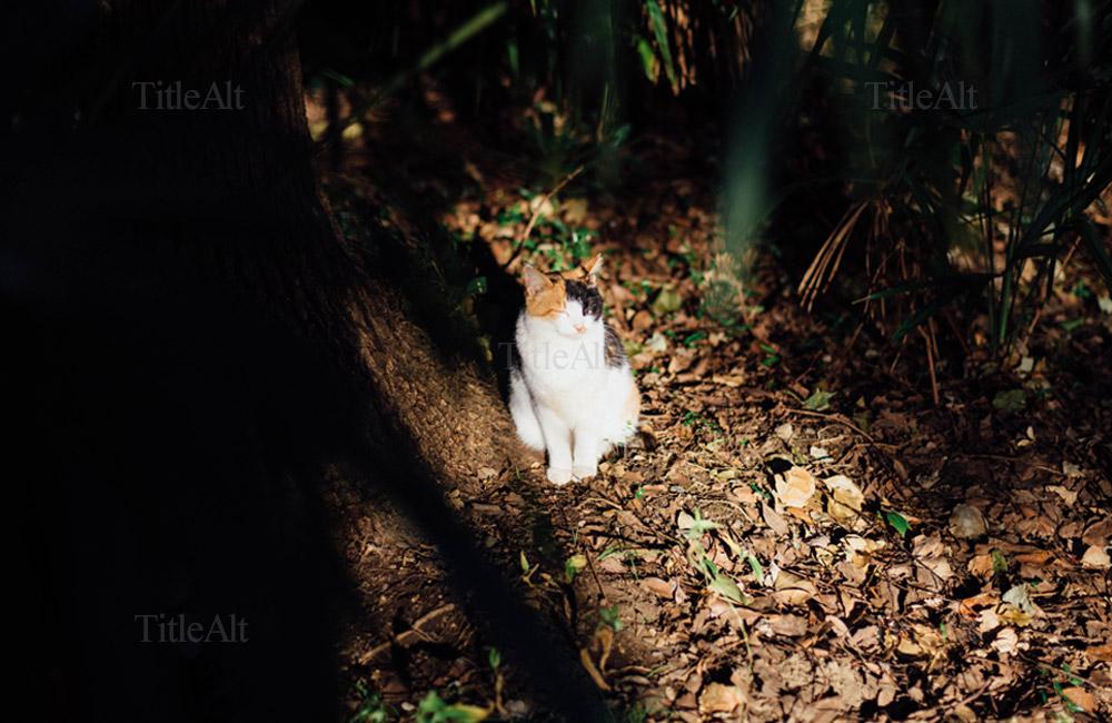 浜離宮にいた猫のひなたぼっこ