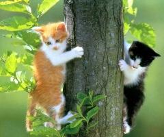 renkli kediler