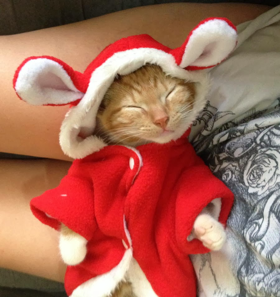 Funny cats - part 89 (40 pics + 10 gifs), kitten sleeping wearing red hoodie