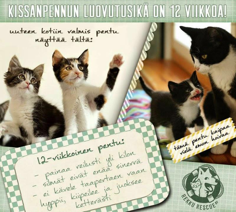 Kissanpennun luovutusikä on 12 viikkoa!