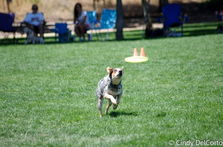 Getting the right disc for your sport dog