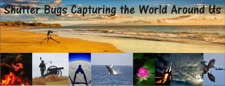 Shutterbugs Capturing the World Around Us