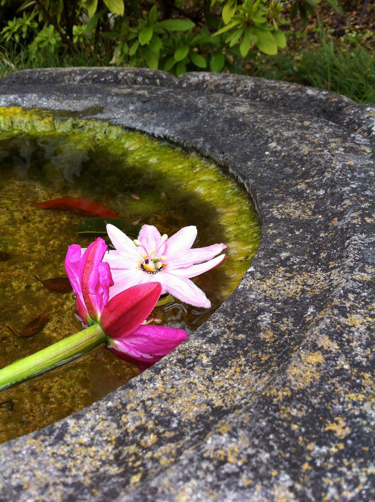 The Blue Lotus Seed A Week Of Love Poems