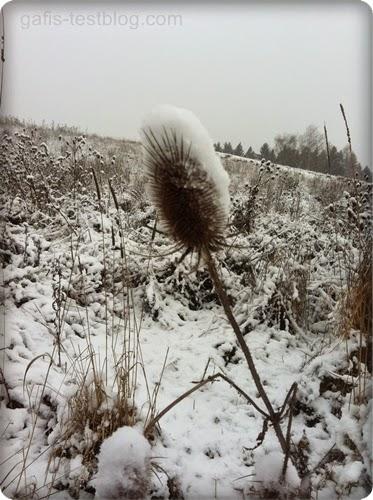 Disteln im Schnee
