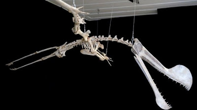 Giant pterosaur fossil unveiled in Brazil