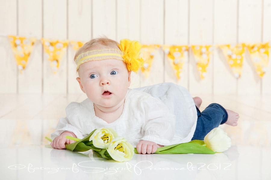 beebitydruk-kollased-lipud-fotopesa
