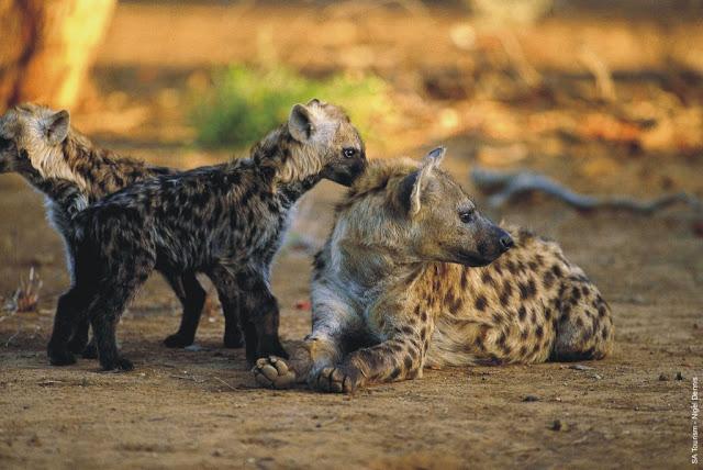 Funny animal photos, funny animals, animal pics, funny pics