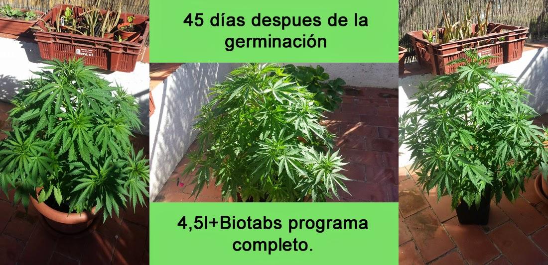 la bio-dinámica de la vida: segumiento método biotabs en planta de