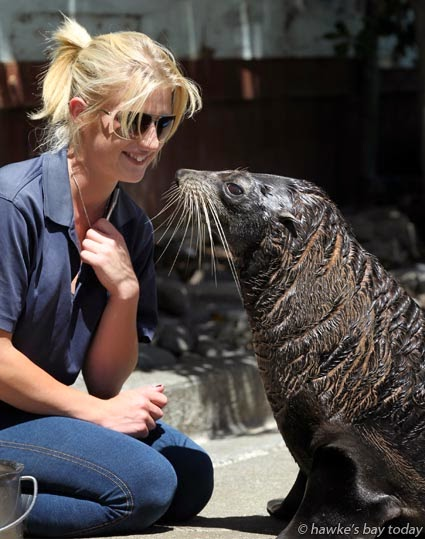 Sonja Murray, keeper, with Ollie, a New Zealand fur seal, in the last public viewing of the animals at Marineland, Napier, before being quarantined for 120 days and flown to marine zoos in Australia photograph