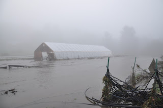 under water at joe's brook farm