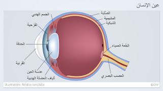 معجزة العين صور علمية عجيبة 0%252C%252C15260656_