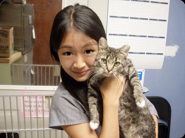 cat kitten kitty fluffy cute grey tabby