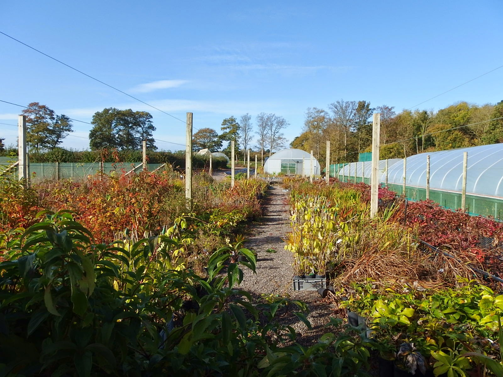 View of the nursery from the gate