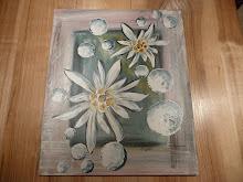Flocons d'edelweiss