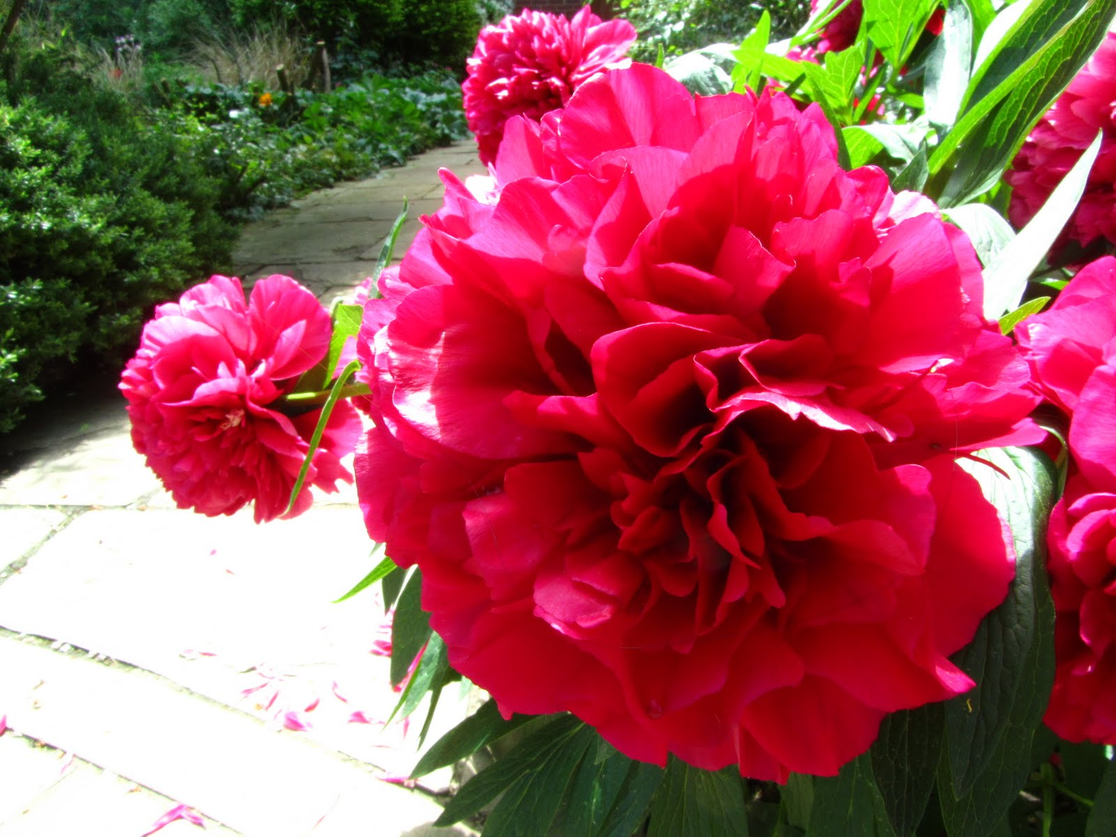 Red Flowers And Their Names