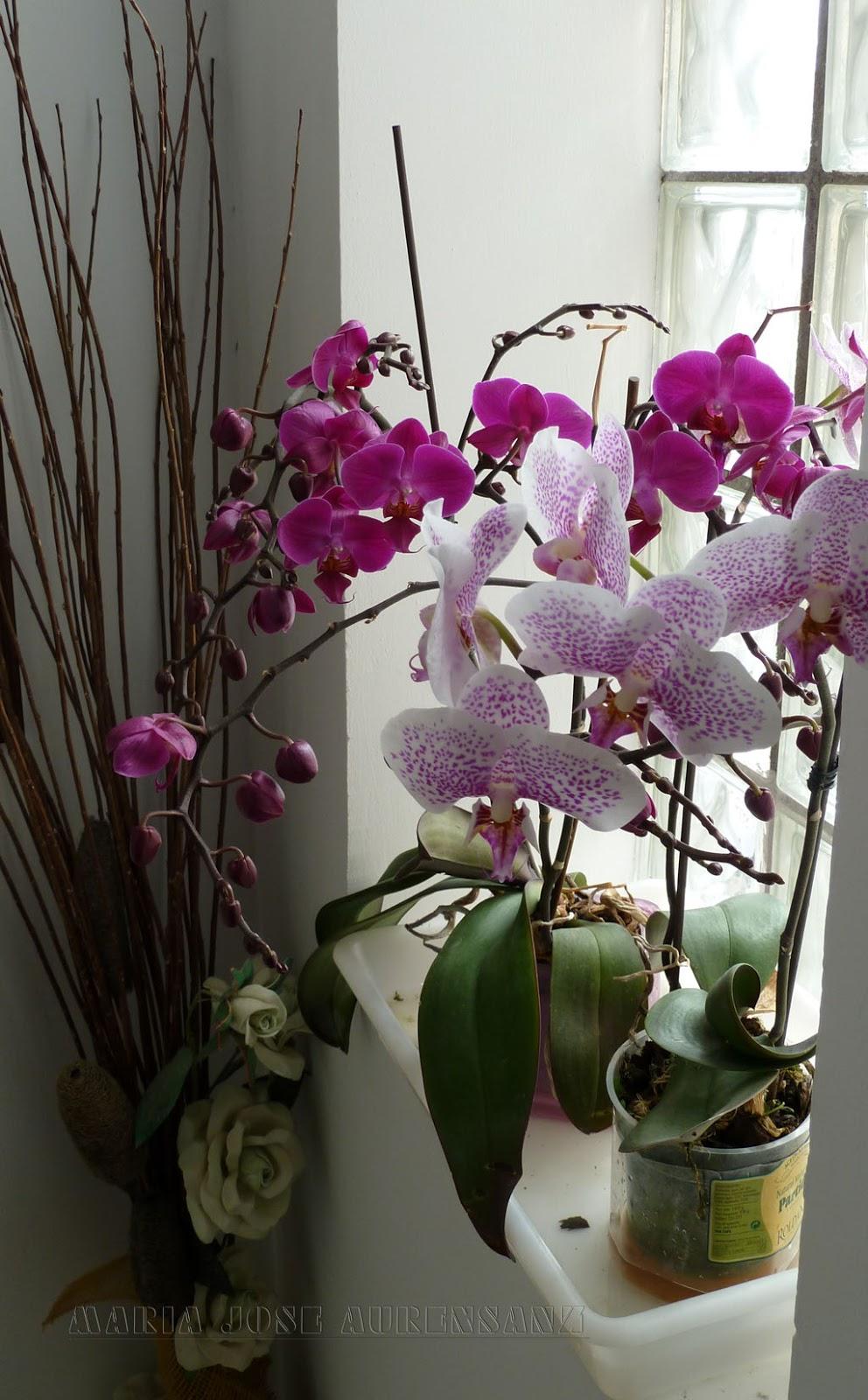 Noelia y los animales de la naturaleza orquideas cuidados for Cuidados orquideas interior