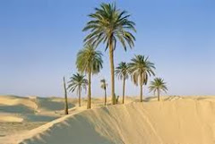 Best Tunisian Public and Private Desert Safari