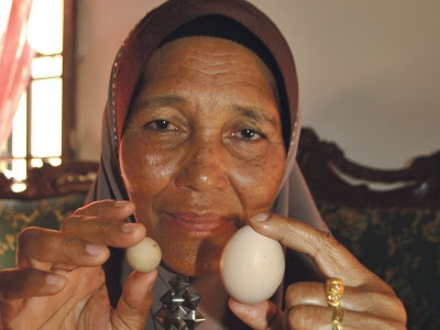 telur ayam pelik