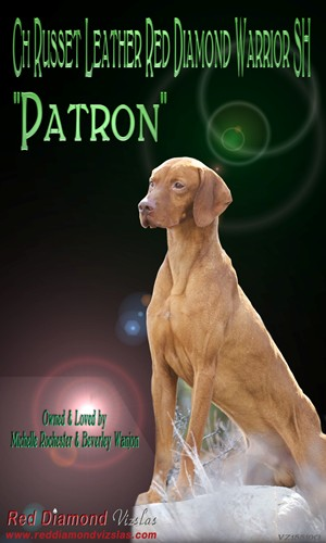 Patron's Ad in the 2012 Vizsla Nationals Catalog