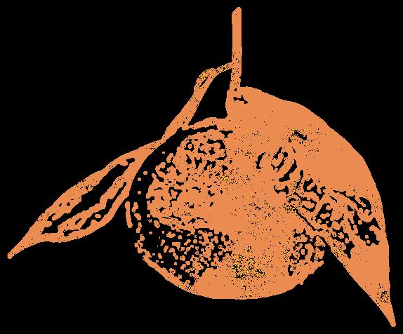 オレンジ・みかん(フルーツ)