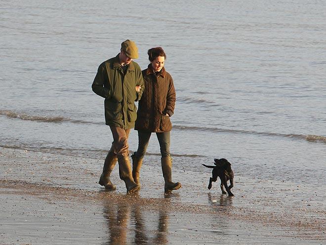 Ouddorp Beach Dogs