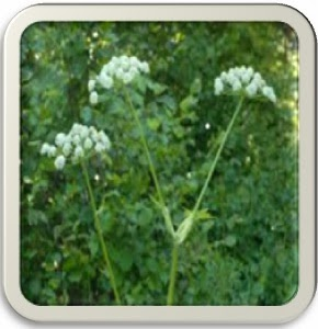 introduction to medicinal plants