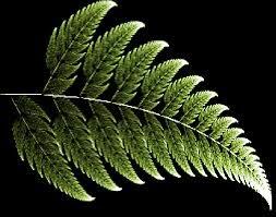 Resultado de imagen de Simetría en las flores