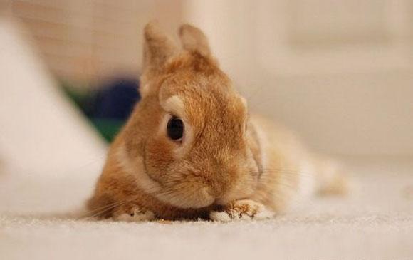 Sweet bunny.