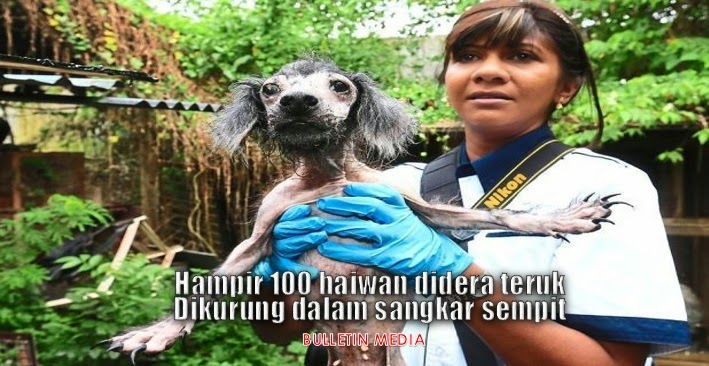 Hampir 100 haiwan didera teruk, Di Kurung Dalam Sangkar Sempit