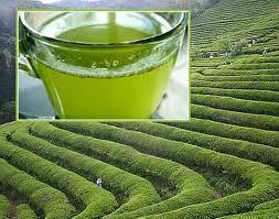 فوائد الشاي الأخضر وعلاقته بإنقاص الوزن و طريقة تحضيره