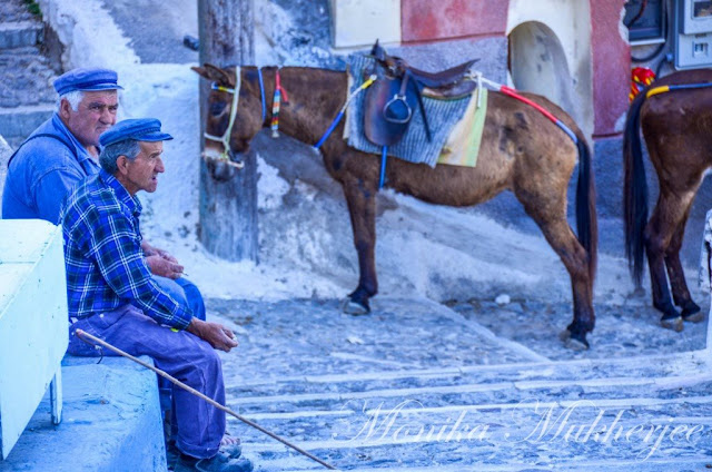 Donkey Station Fira Santorini Greece by Monika Mukherjee