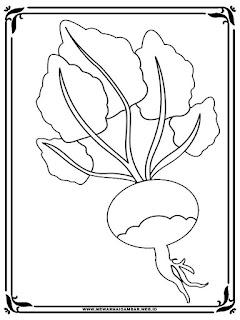 gambar lobak untuk diwarnai anak tk