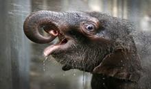 صور فيل رائعة جدا
