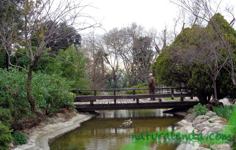 puente sobre estanque