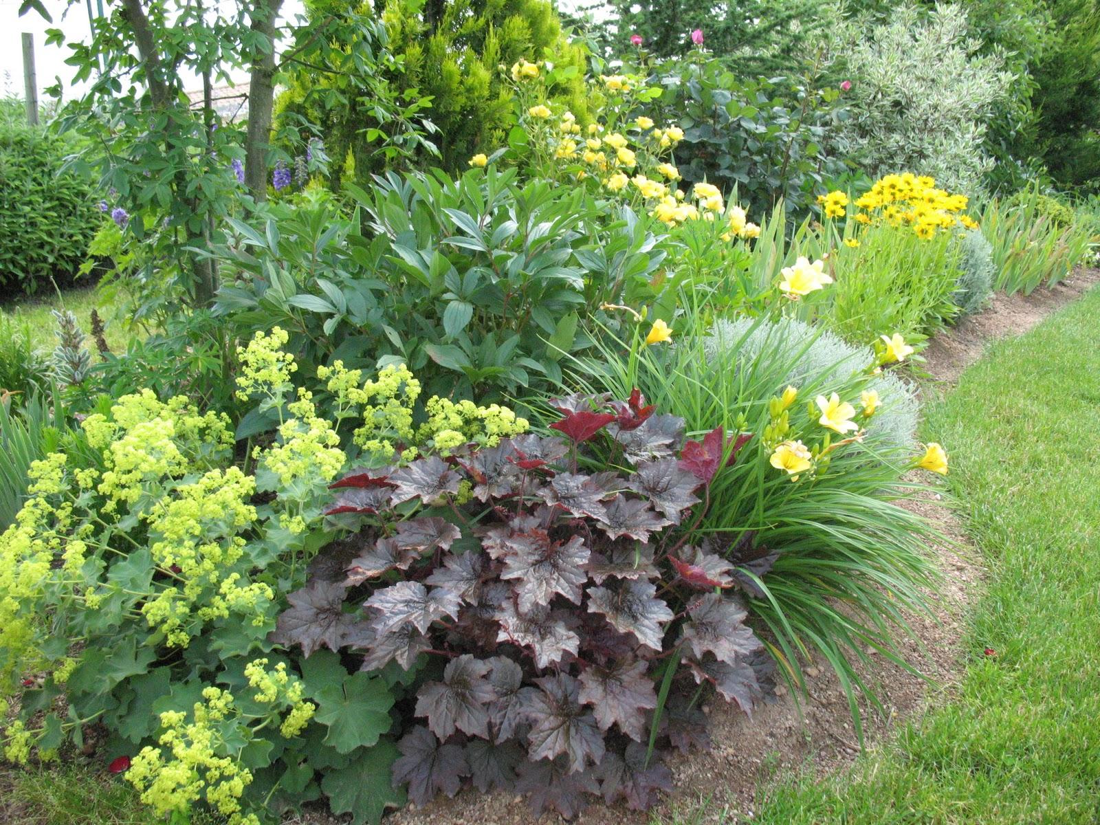 """Roses du jardin Chêneland: Heuchère """"Palace Purple"""""""