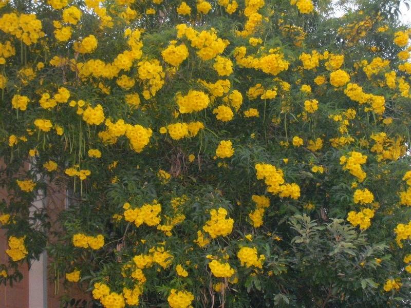 Kantinho Da Edite Flor Amarela Flor Tão Bela