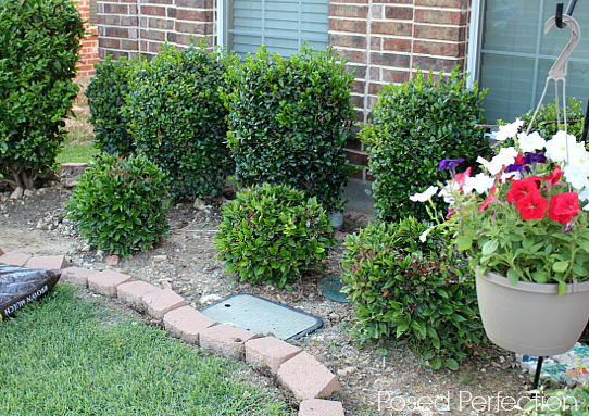 Summer Landscaping posed perfection: ah, that's mulch better ~ summer landscaping