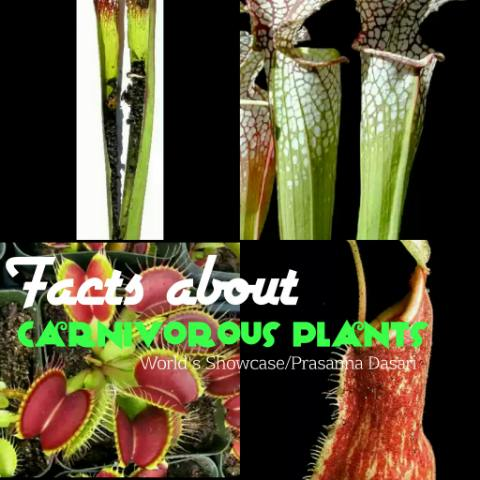 Some Interesting Facts About Carnivorous Plants