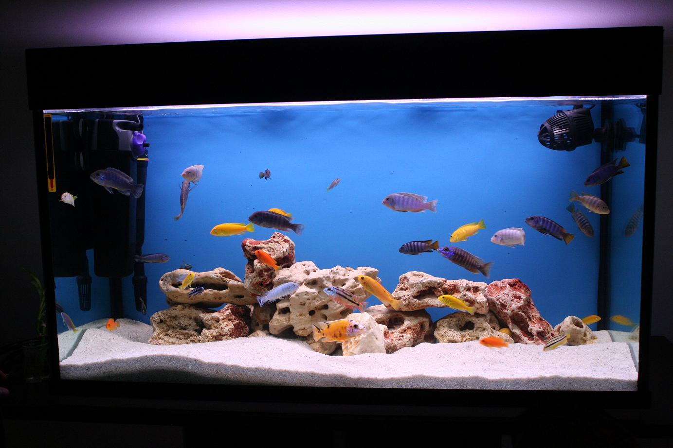 Fish tank in home place - The Most Incredible Fish Aquariums You Have Never Seen